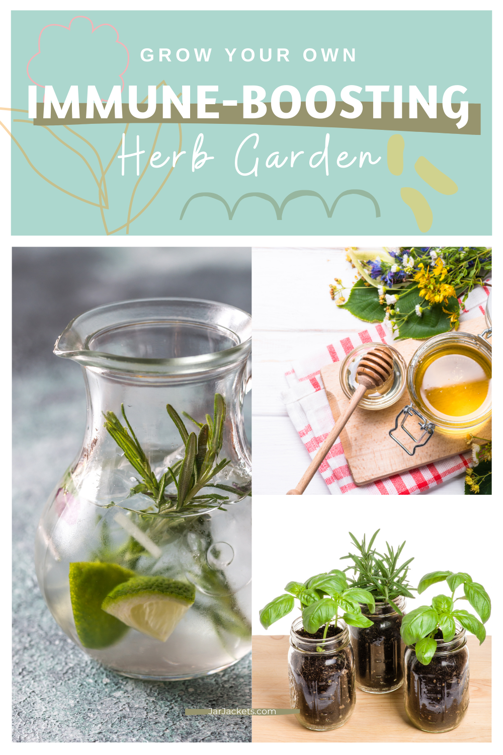 Grow Your Own Immune-Boosting Herb Garden