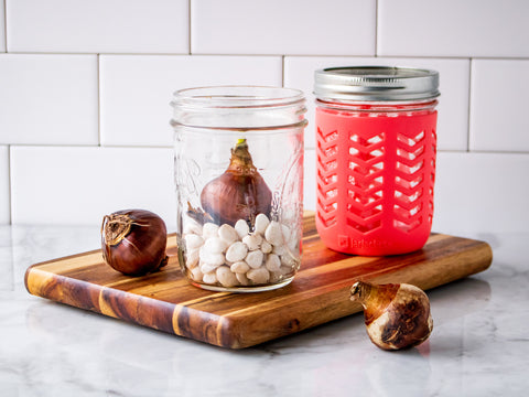 Two Mason jars are filled with white rocks and flower bulbs.