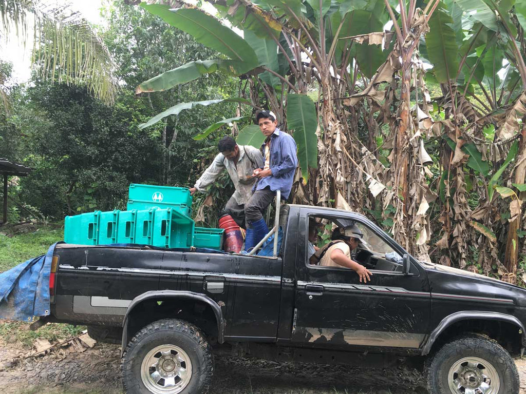 Sourcing Season: Breaking Barriers in Bolivia | a truckload of cacao beans in bolivia