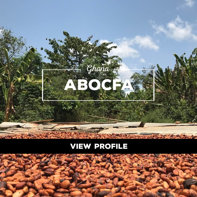 Taza Chocolate Sourcing Partner: ABOCFA Partner Profile, Ghana
