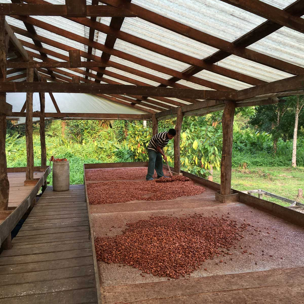 Sourcing Season: Snapshots from Belize – Taza Chocolate