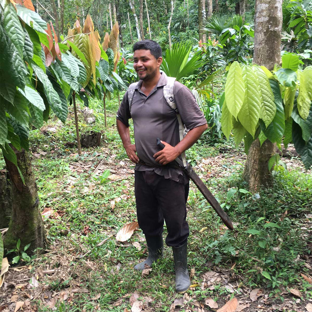Our export partner in Belize, Maya Mountain Cacao, has planted a demonstration farm to teach local producers good agricultural practices. Ermain is the farm manager