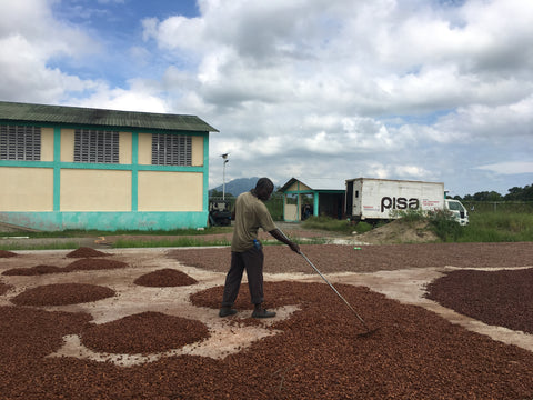 PISA's staff rakes cocoa to ensure an even, consistent drying of the beans