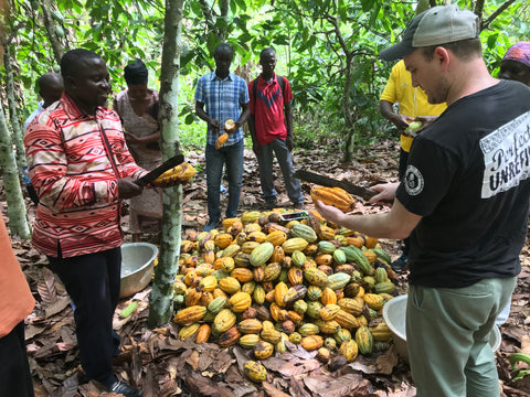 Association Manager Stephen shows me how to use a machete to cut open a cacao pod