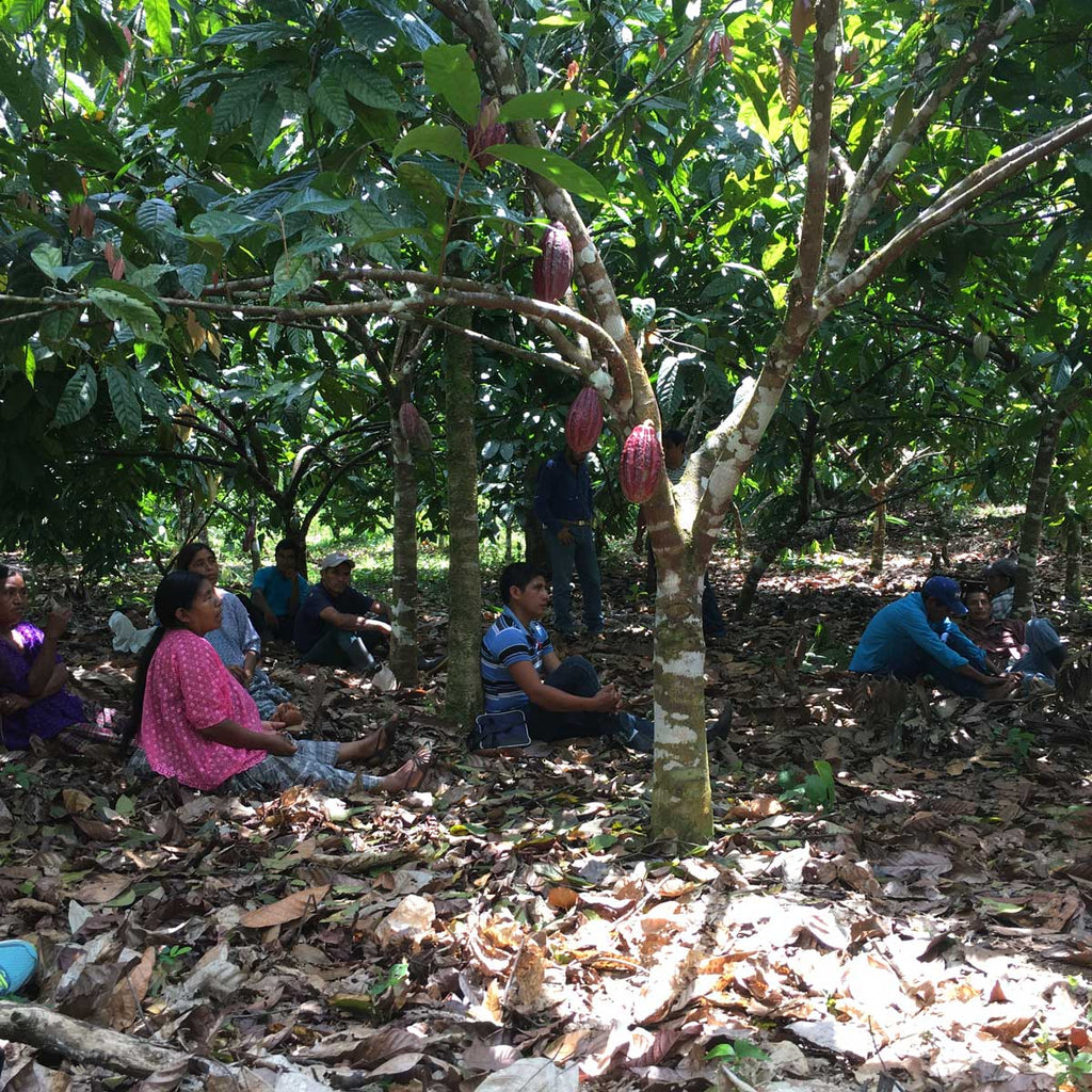 Farmers gather among the cacao trees to discuss issues facing their cooperative, including whether or not to become organic certified