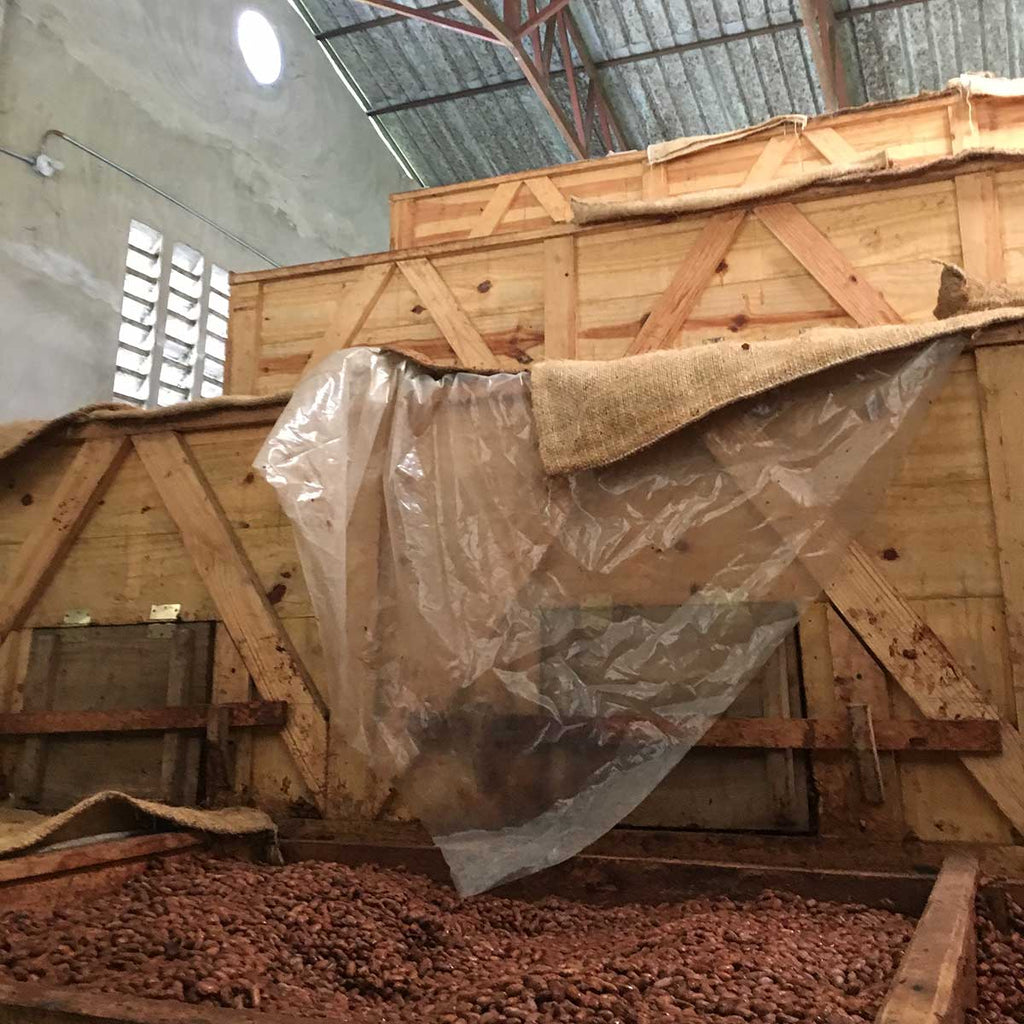 Cacao fermenting in wooden boxes. The fermentation process releases the beans' unique flavors. Without it, chocolate tastes bitter and astringent