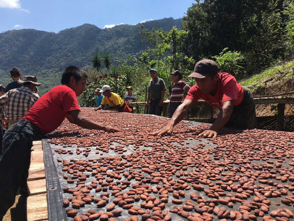 Snapshots From Sourcing Season: Guatemala | Farmers turn the beans by hand to make they get a full and even drying in the bright Guatemalan sun.