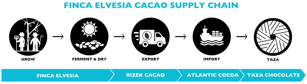 Taza Chocolate Cacao Supply Chain | Finca Elvesia