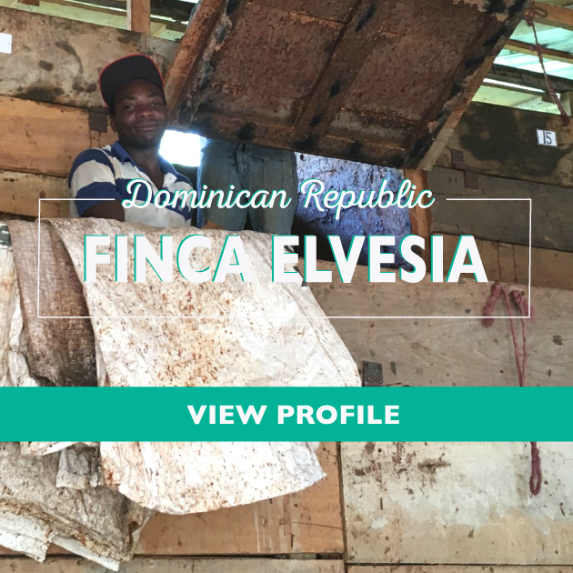 Taza Chocolate Sourcing Partner: Finca Elvesia Partner Profile, Dominican Republic