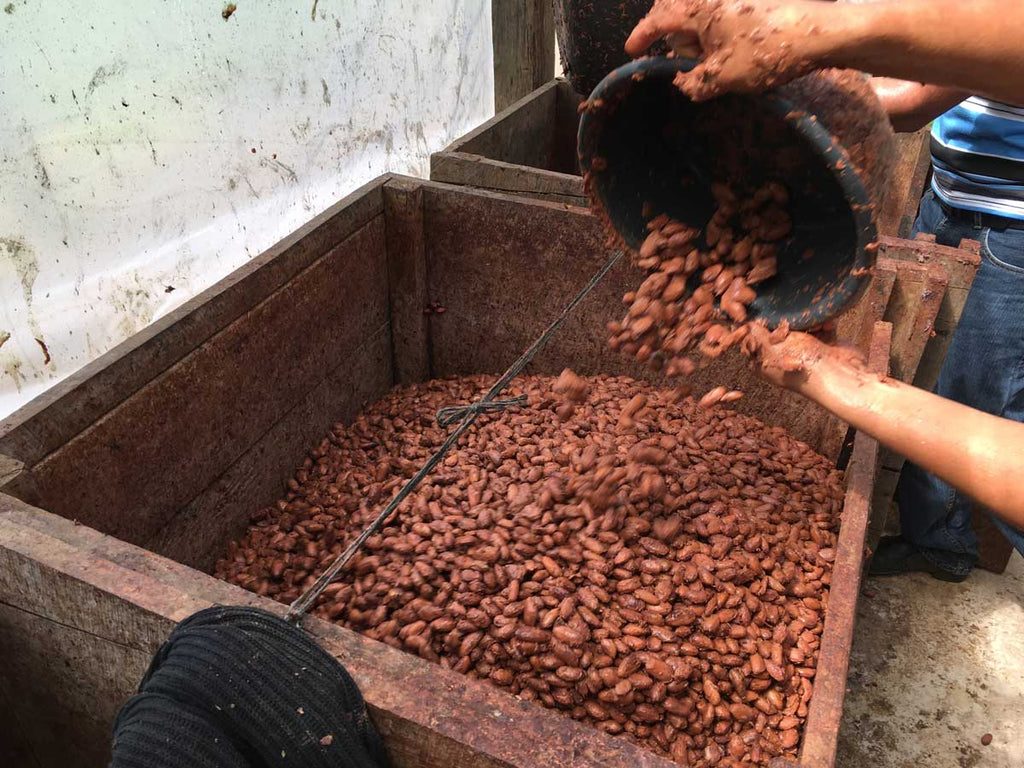 In this box, the harvested cacao beans heat up and ferment, releasing flavors like red fruit, caramel and nuttiness that reflect the unique terroir of the region.