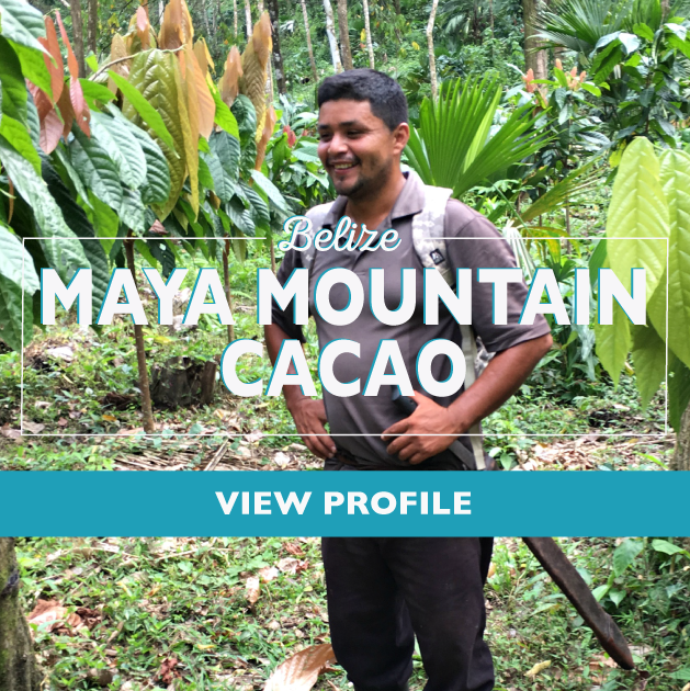 Taza Chocolate Sourcing Partner: Maya Mountain Cacao Partner Profile, Belize