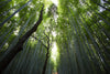 The truth about organic bamboo