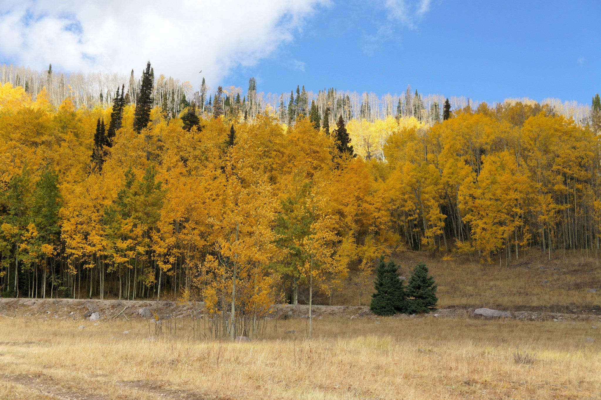 10 Amazing Utah Fall Foliage Photos