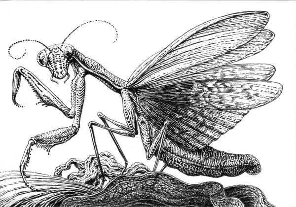 Ornate Praying Mantis Ink Drawing