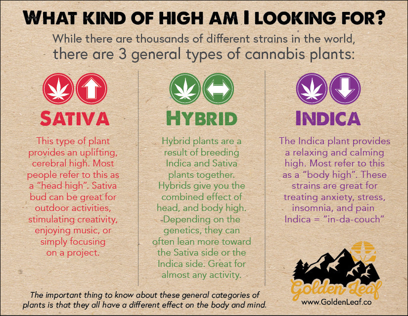 Difference between Sativa, Hybrid, and Indica cannabis plants