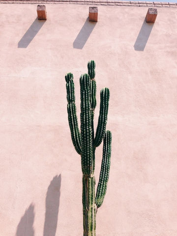 Desert Plants & Succulents For Interior and Exterior Design