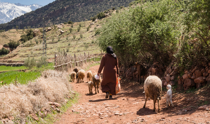 Berber rugs from the heart of the Atlas Mountains