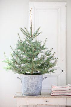 Small Christmas tree in a bucket