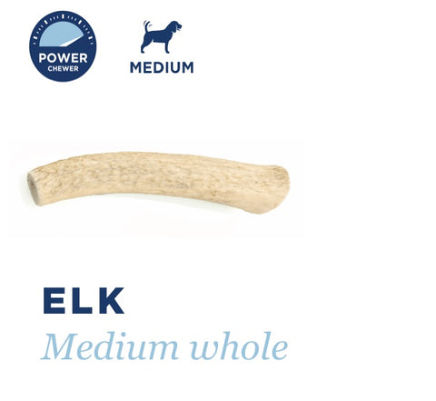 BARKWORTHIES DOG ELK ANTLER WHOLE MEDIUM