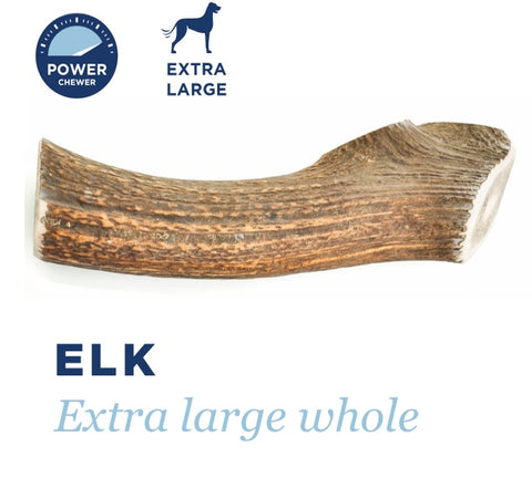 BARKWORTHIES DOG ELK ANTLER WHOLE EXTRA LARGE