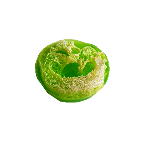 Green oval shaped soap, see through to the loofa pieces in the centre