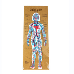 Circulatory System Cut-out