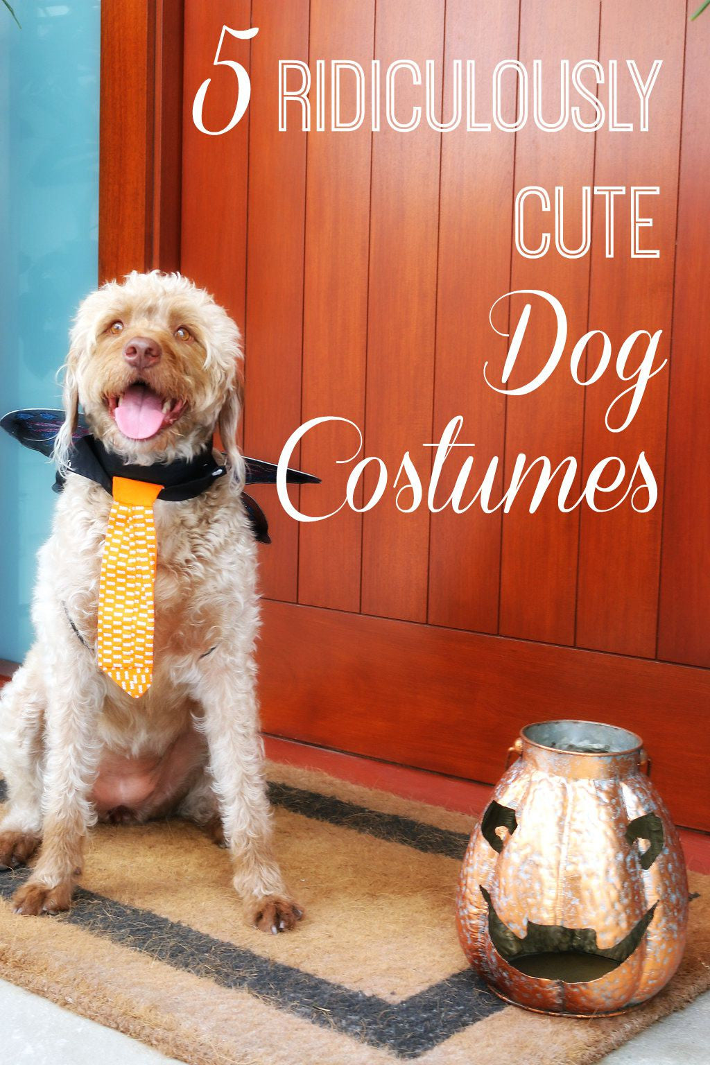 5 Ridiculously Adorable Halloween Costumes For Dogs