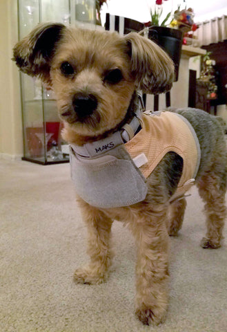 6 cute summer harness ideas for your small dog