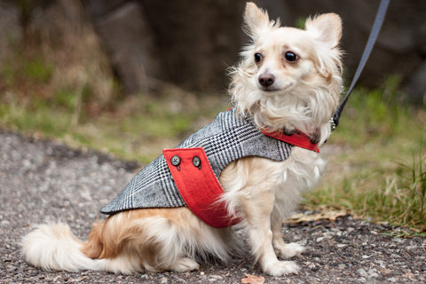Tailored Dog Jacket handcrafted from reclaimed wool by Oxford Dogma