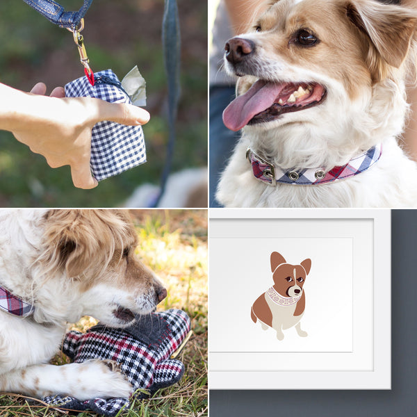 a round up of dog accessories in the Oxford Dogma catalog that are perfect for gifting