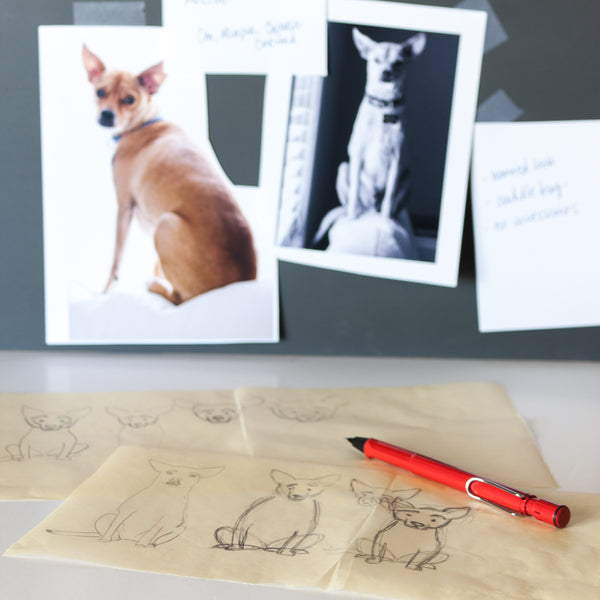 sketching process for custom pet portrait of Archie the Chi mix