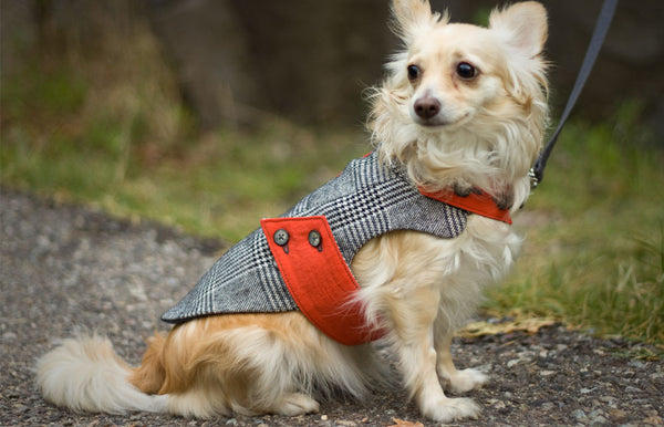 Small Tailored Dog Jacket in black and ivory houndstooth | oxforddogma.com