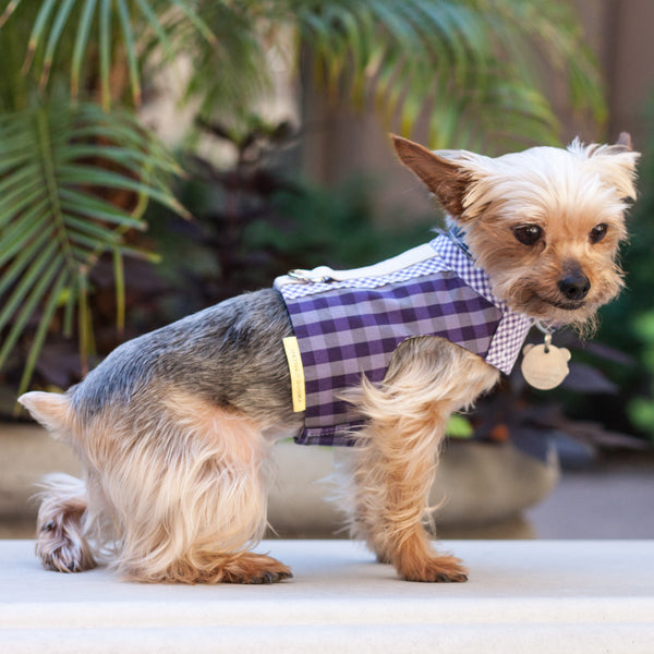 The Comfort Vest Harness is especially for small dogs to keep them safe and comfortable on the leash | oxforddogma.com