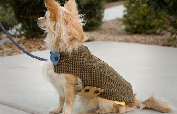 A finely-crafted Tailored Classic Jacket for dapper dogs | oxforddogma.com