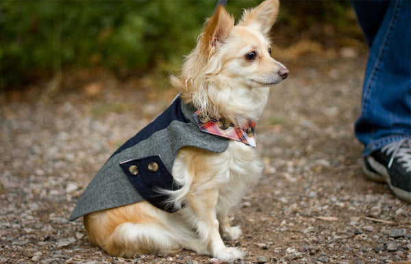 Tailored Classic Dog Coat in Grey and Navy Wool | oxforddogma.com