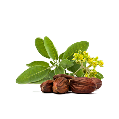 Jojoba Oil in natural skincare
