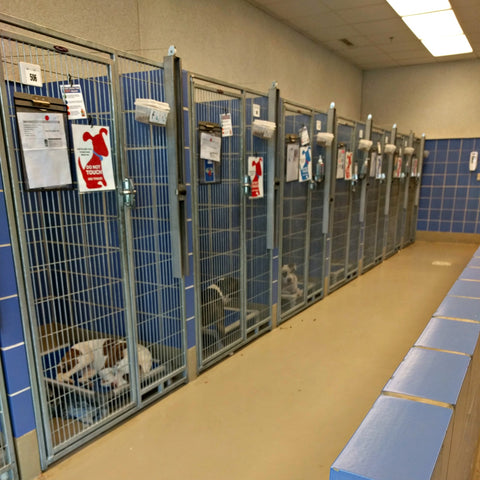 Kennels at the animal shelter