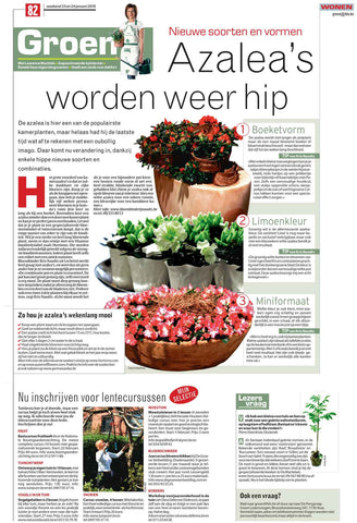 Weekendkrant HLN geënte walnotenboom