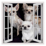 Fake 3D Window chihuahua poil long | Canvas, Posters, Prints & Stickers - StyleIsUS.com