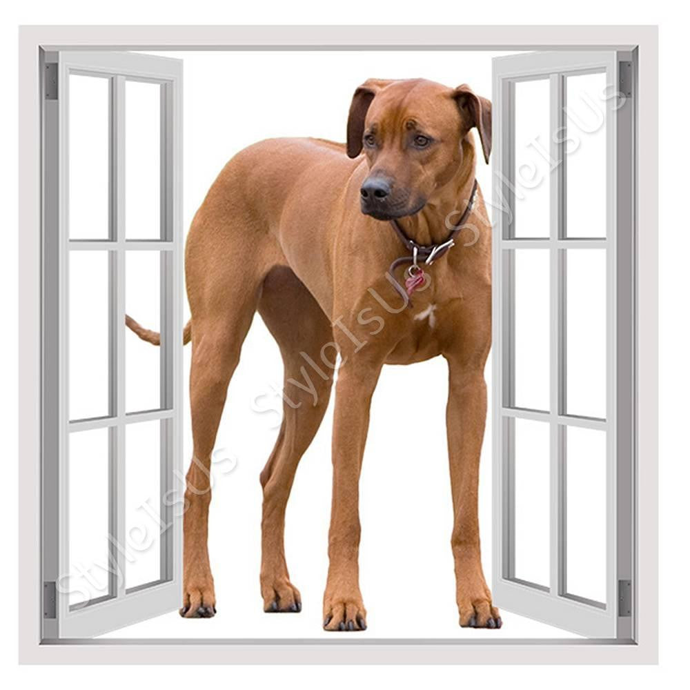 Fake 3D Window Ridgeback Breed Dog | Canvas, Posters, Prints & Stickers - StyleIsUS.com