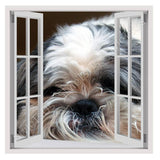 Fake 3D Window Shi Cricket Breeded dog | Canvas, Posters, Prints & Stickers - StyleIsUS.com