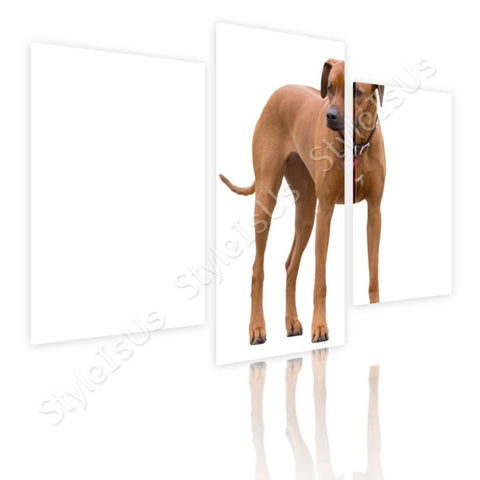 Split 3 panels Ridgeback Breed Dog 3 Panels | Canvas, Posters, Prints & Stickers - StyleIsUS.com
