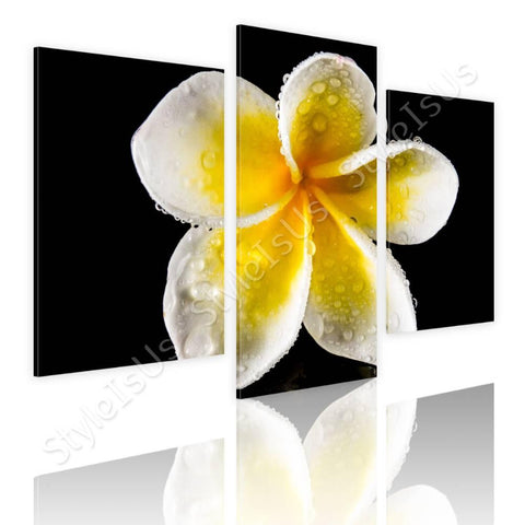Split 3 panels White Frangipani Flower 3 Panels | Canvas, Posters, Prints & Stickers - StyleIsUS.com