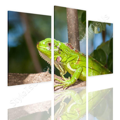 Split 3 panels Reptile Wildlife 3 Panels | Canvas, Posters, Prints & Stickers - StyleIsUS.com