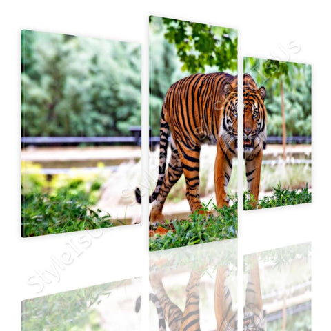 Split 3 panels Tiger Stripes walking 3 Panels | Canvas, Posters, Prints & Stickers - StyleIsUS.com