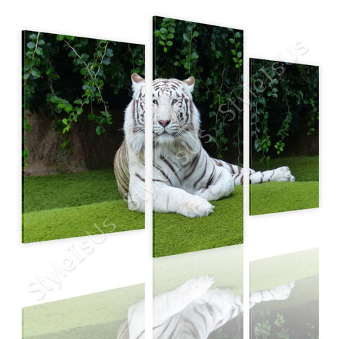 Split 3 panels White tiger resting 3 Panels | Canvas, Posters, Prints & Stickers - StyleIsUS.com