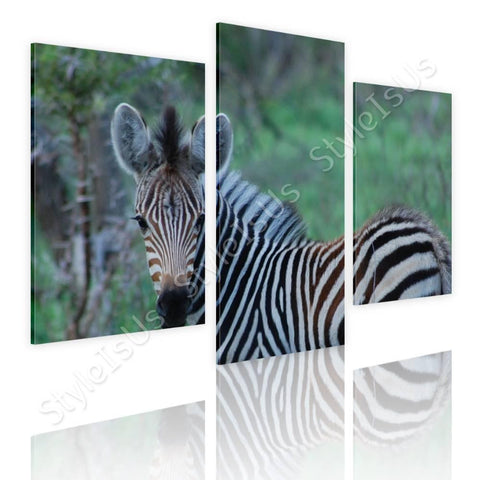 Split 3 panels Zebra in wildlife 3 Panels | Canvas, Posters, Prints & Stickers - StyleIsUS.com