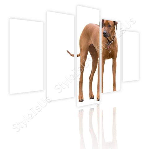 Split 5 panels Ridgeback Breed Dog 5 Panels | Canvas, Posters, Prints & Stickers - StyleIsUS.com