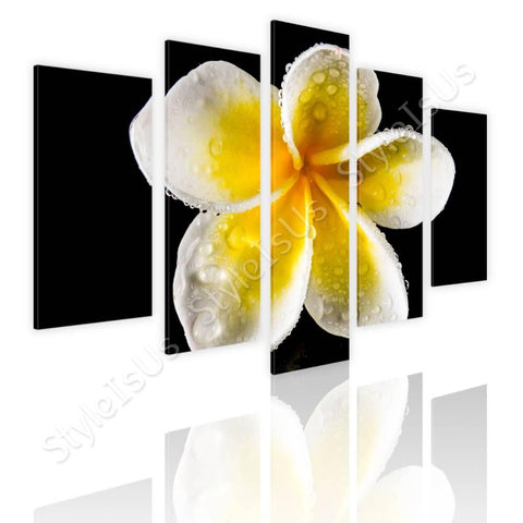 Split 5 panels White Frangipani Flower 5 Panels | Canvas, Posters, Prints & Stickers - StyleIsUS.com