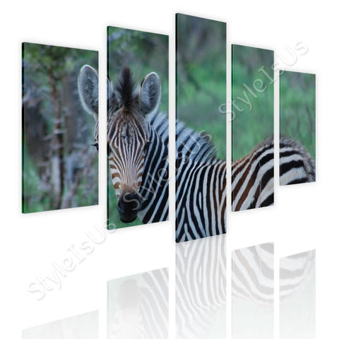 Split 5 panels Zebra in wildlife 5 Panels | Canvas, Posters, Prints & Stickers - StyleIsUS.com